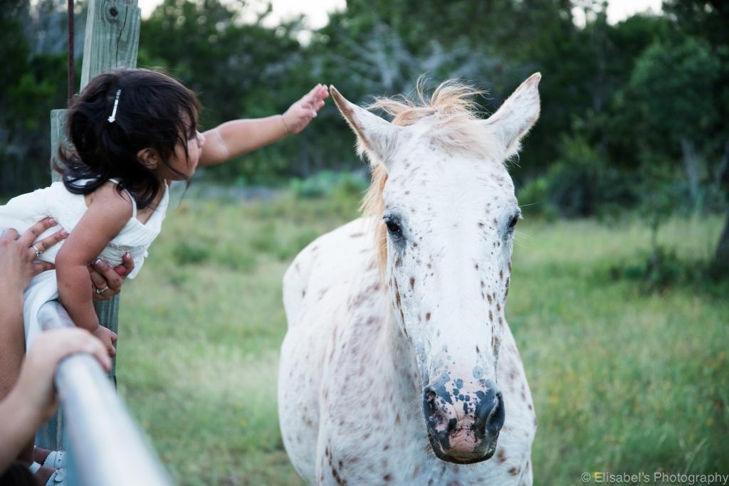 p-guest-horse-DSC_0487